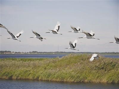 黑龙江省扎龙国家级自然保护区评为中国十大魅力湿地